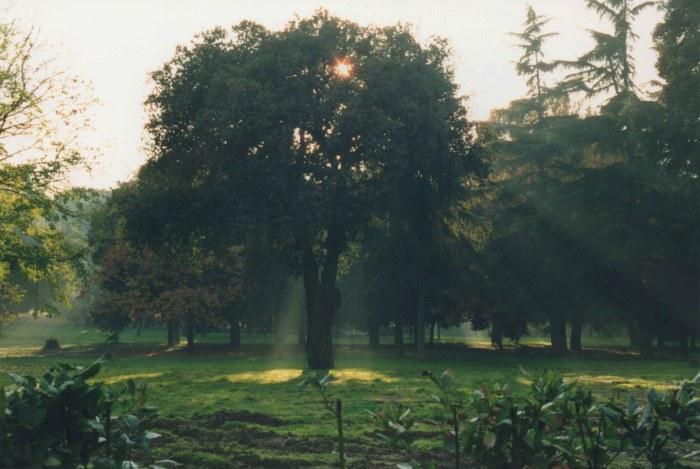 17a.Rome1999.jpg